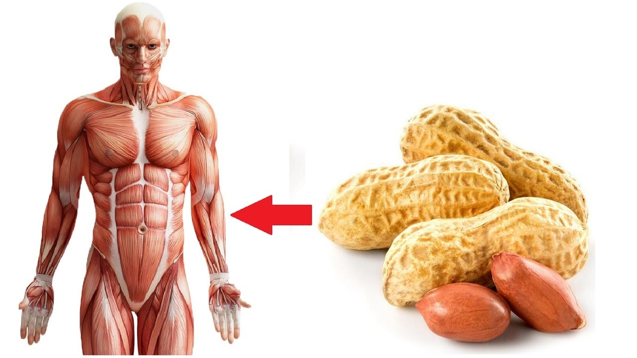 What Peanut Butter Does To Your Body
